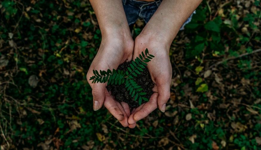 Woman holding a plant symbolizing eco-friendliness